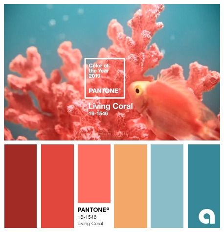 pantone living coral cor do ano 2019